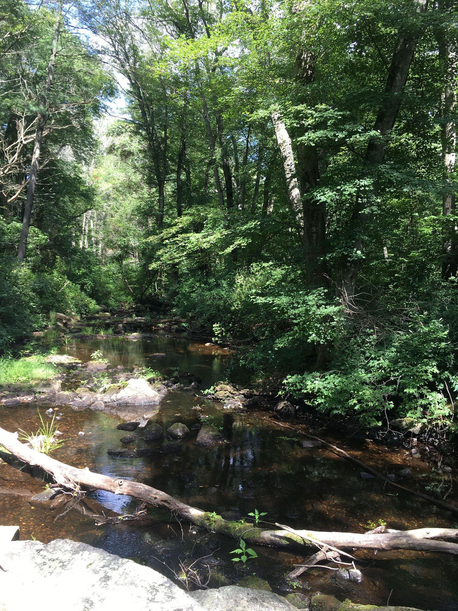 Sea Run Brook Trout Stream