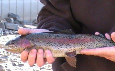 Colorado: Winter Fly Fishing