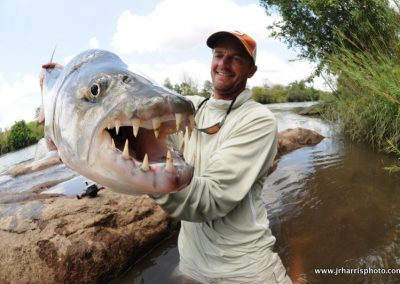 tigerfish_jeff_currier_009